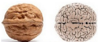 Alzheimer's disease: A novel food to improve cognitive function